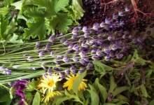 ervas medicinais fáceis de cultivar