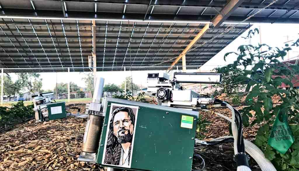 A agricultura sob painéis solares economiza água e cria energia 3