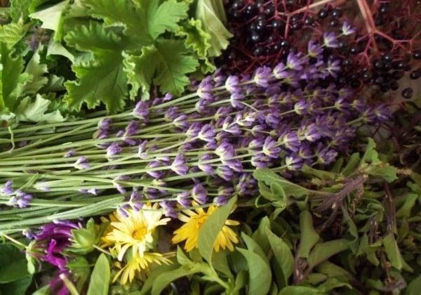 5 Ervas medicinais fáceis de cultivar na sua casa