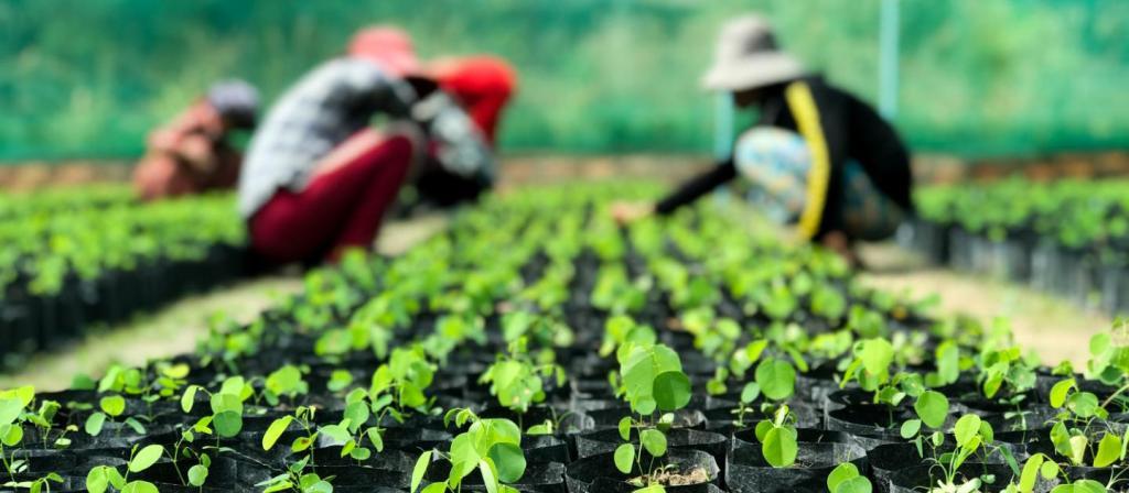 plantando árvores é a tecnologia para combater mudanças climáticas