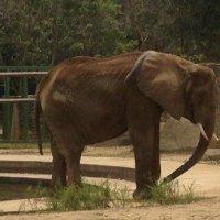 Chudák slon, takhle hladoví ve venezuelské ZOO...