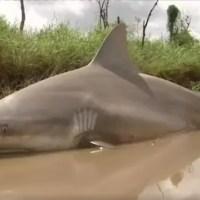 Sharknado v praxi! V Austrálii spláchl cyklon žraloky do řek a dokonce i do ulic