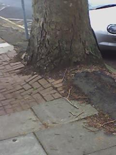 Lovelace pavement