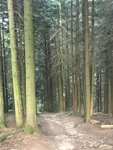 Entrée dans la forêt après le calvaire