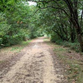 beaux chemins de compostelle dans le Bearn