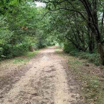 Compostelle par petits bouts : Arthez- Sauvelade :17 km
