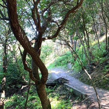 Camino del Norte: Bayonne – Saint Jean du Luz 26 km