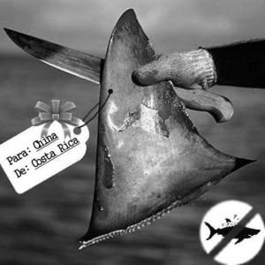 Llamado urgente para salvar 2000 tiburones martillo