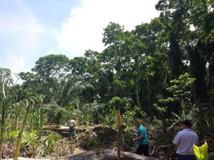 Ruta destruye hectareas de Humedal Cariari en Moin3