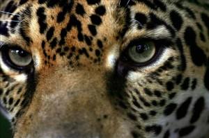 Dia Nacional de los Felinos en Costa Rica