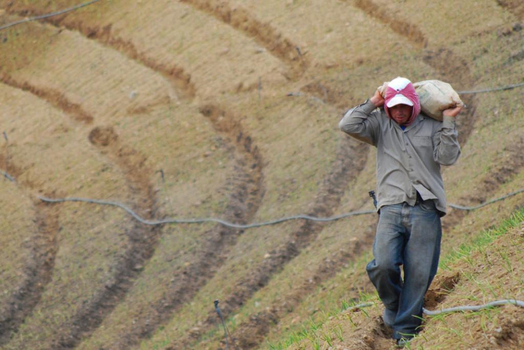 UCR presenta a agricultores de Cartago una nueva alternativa para comercializar sus hortalizas2