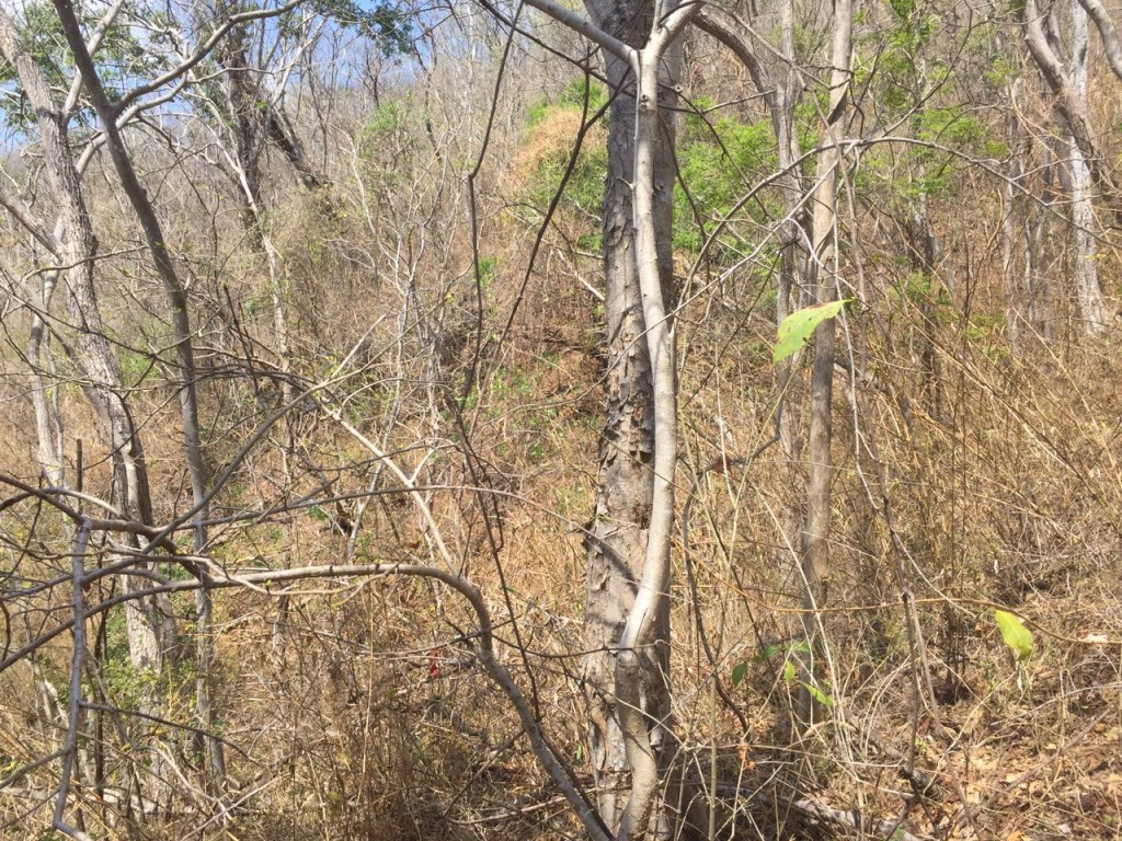 UCR Paramos bosques secos y arrecifes entre ecosistemas de interes para expertos en cambio climatico