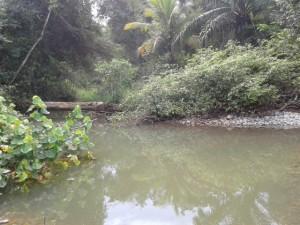El cambio climatico ya tiene un impacto en el Parque Nacional Marino Ballena13