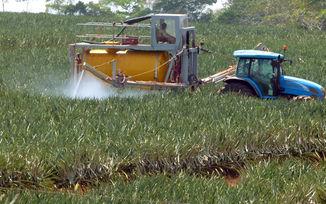 A proposito de un reciente foro sobre la expansion pinera en Costa Rica3