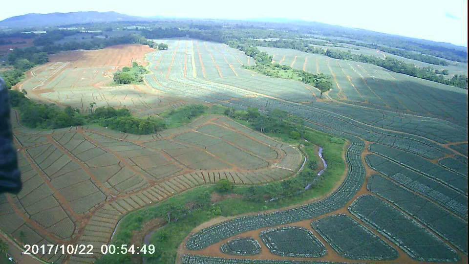 A proposito de un reciente foro sobre la expansion pinera en Costa Rica6