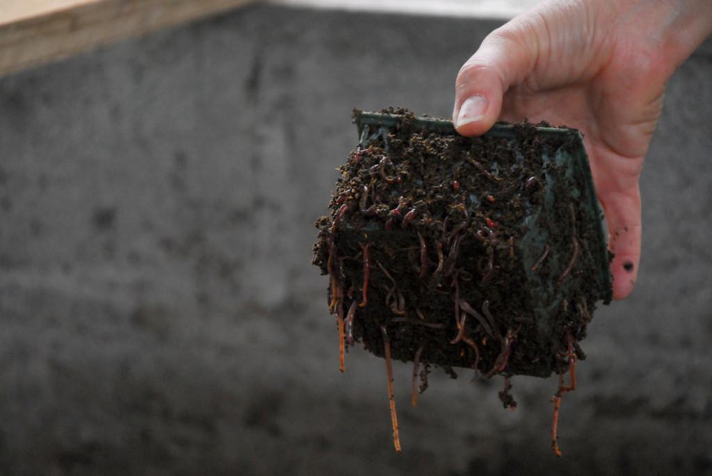 UCR Es posible la ganaderia organica en Costa Rica3