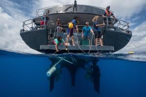 UCR aporta experiencia cientifica en estudio de corredor marino entre Isla del Coco e Islas Galapagos