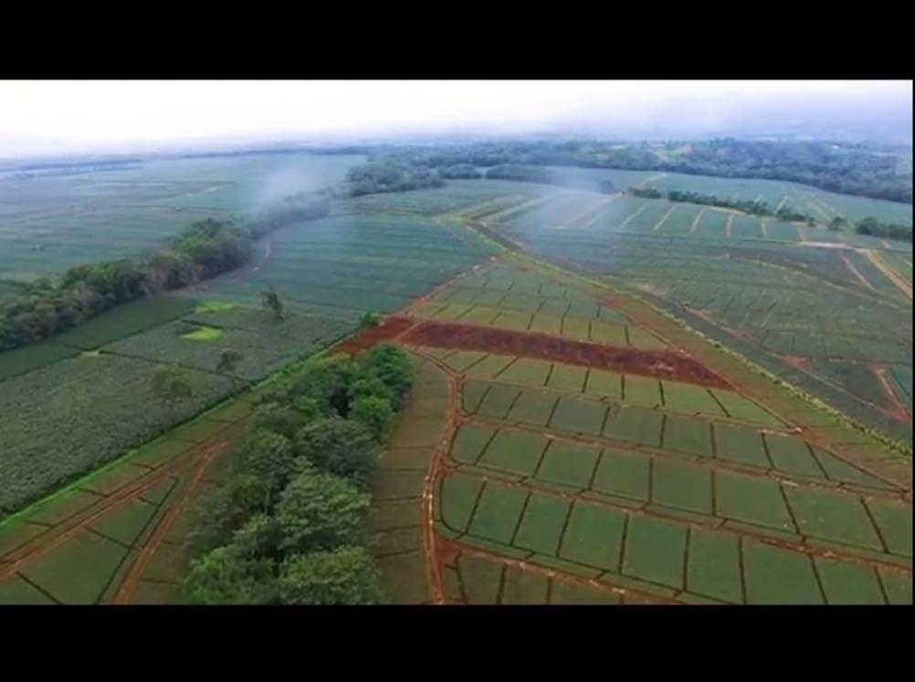 El video se basa en las cifras del último Censo Nacional Agropecuario del 2014, para mostrar los principales monocultivos del país: piña, café, caña, palma africana y banano, así como otros cultivos que podrían prosperar en Costa Rica bajo un modelo de producción diversificado.