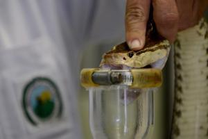 UCR Comunidades pueden capacitarse para prevenir y tratar mordeduras de serpiente