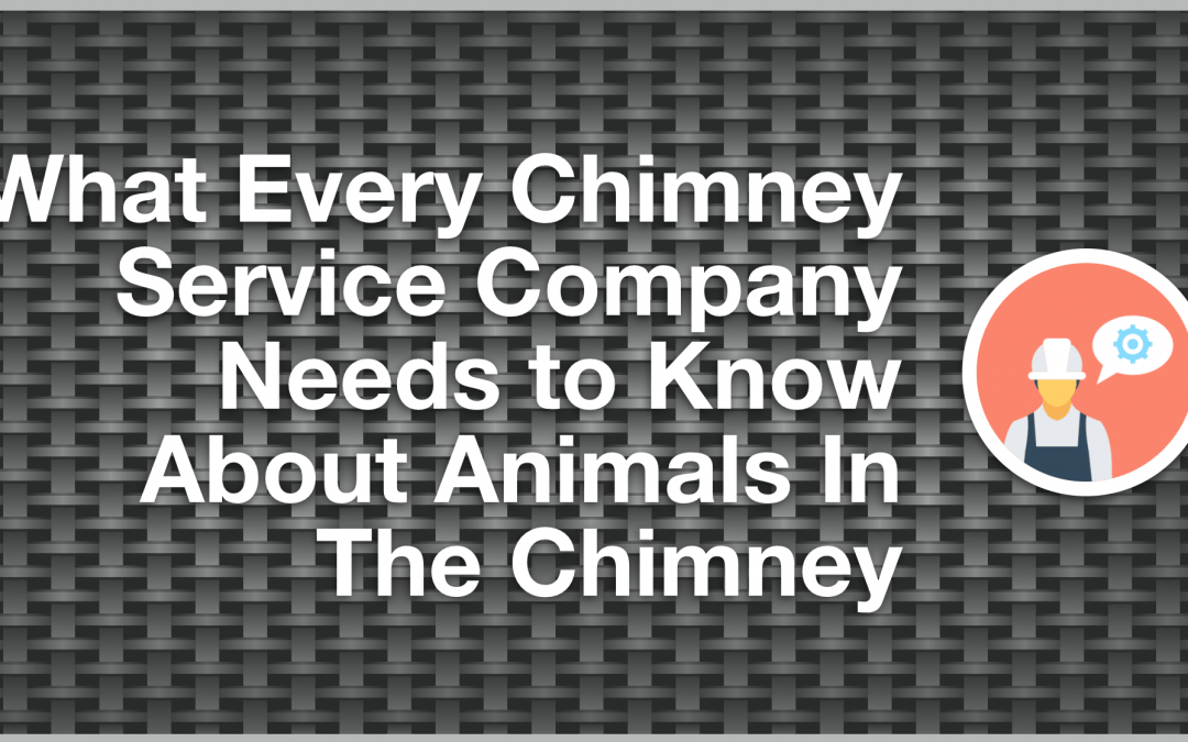 What Every Chimney Survive Company Needs to Know About Animals In The Chimney
