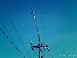 March 2015, Costa Rica. Copyright © Sherley J. Edinbarough (Surely, Sherley and/or SurelySherley), 2015. Birds perched on electricity lines, onlooking the ocean.