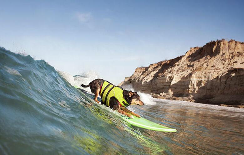 Рекорды в сёрфинге. Самая длинная волна, по которой проехала собака.
