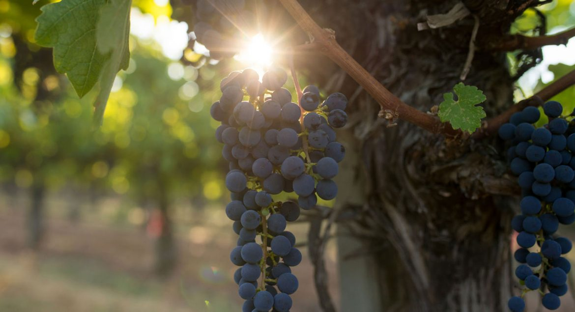 Everything You Need to Know about Natural, Organic, and Biodynamic Wines