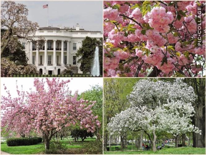 Primavera em Washington