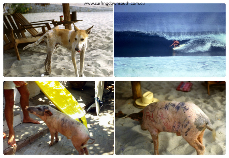 1980s Mexico Puerto Escondido Tripod dog Rich & Arnold Ziffel pig collage