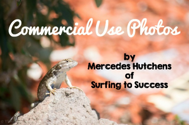 Photos you can use in your educational products.