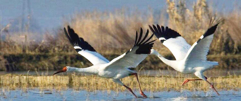 omid crane