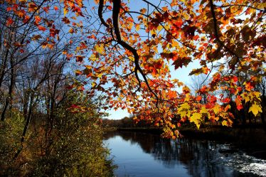Fall-tree-branch-leaves-along-river_-_Virginia