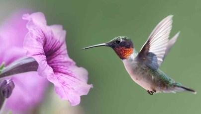 HummingbirdDesignForAerialVehiclesPic