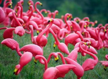 plastic flamingos in yard