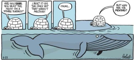 igloo built on whale