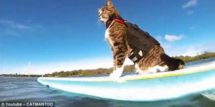 Didga on surfboard