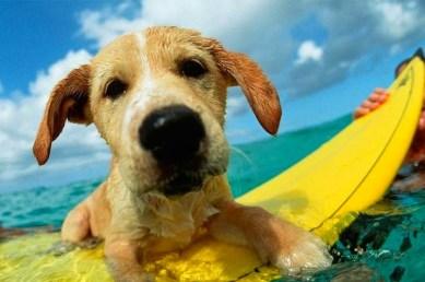 dog closeup on yellow board
