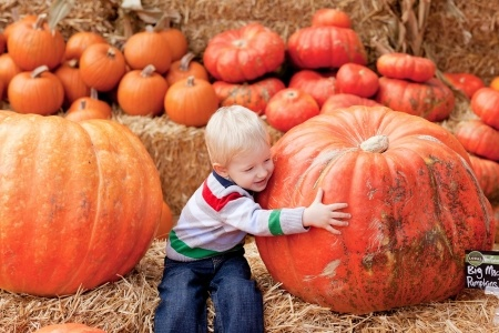 toddle in a pumpkin patch