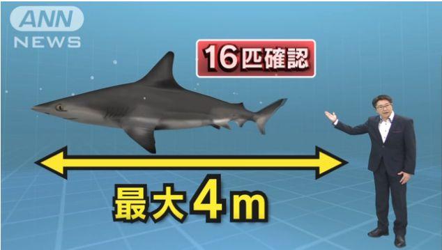 太平洋沿岸はサメだらけ