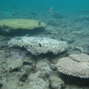 サンゴ白化現象