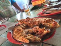 Ikan Bulet