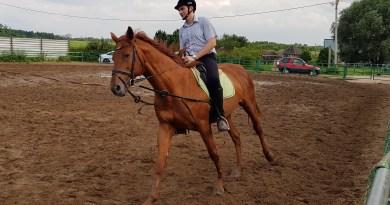 Управление лошадью бандажирование желудка