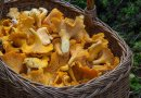 Польза грибов. 6 причин добавить в рацион грибы