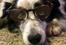 Ваша собака гений?