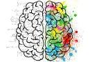 Теперь учёные знают, как мозг работает с фактами. Как это может помочь людям?
