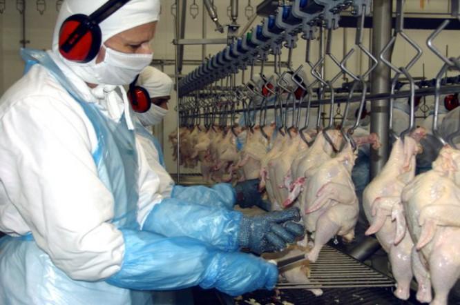 Com embargo da UE, preço do frango pode cair no Brasil