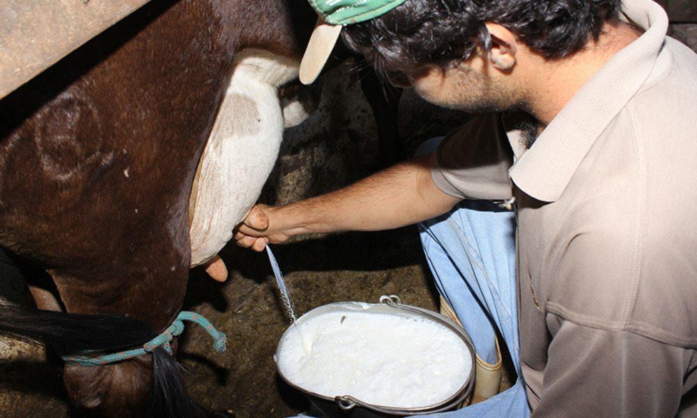 Bacia leiteira é tema de encontro com agricultores familiares do município de Gurupi