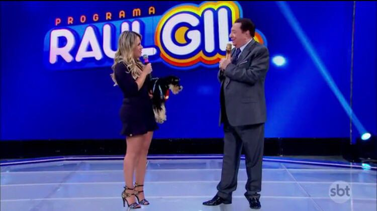 Apresentadora Flavinha Cheirosa presenteia Raul Gil com cachorrinho da Raça Schnauzer