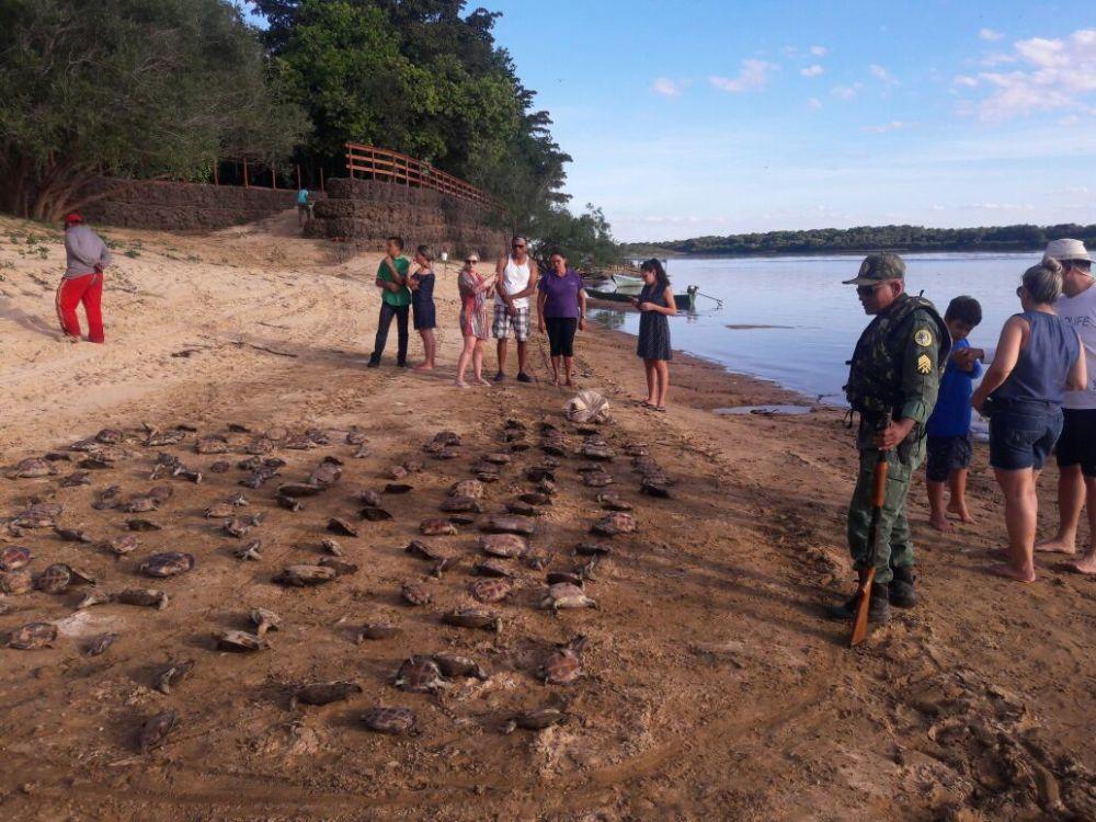 """""""Operação Cantão"""" devolve 369 filhotes de tartarugas à natureza"""