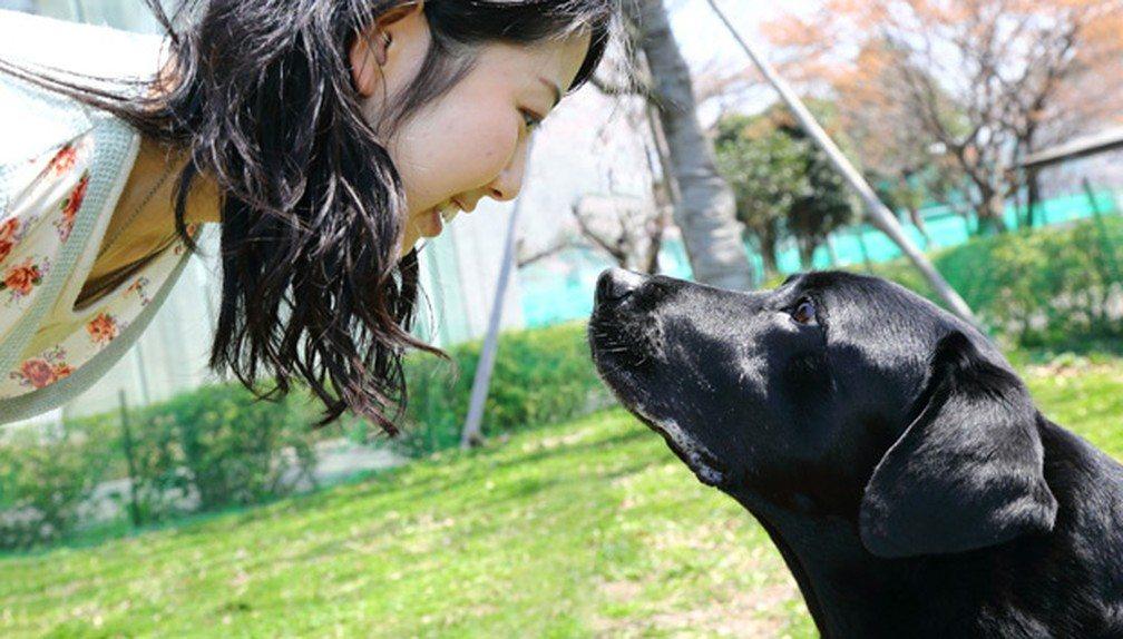 Justiça garante tratamento de cão com Leishmaniose em vez de Eutanásia